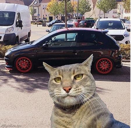 گربه ای ایرانی که 206 سوار می شود !