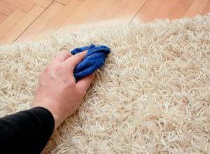 آیا نجاسات سگ از فرش و وسایل منزل با آب پاک میشود؟